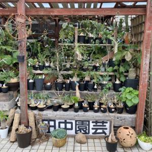田中園芸さんは塊根植物パラダイス٩(Ü*)❤