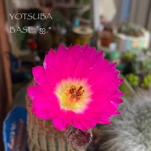 紫太陽ととうもろこしご飯٩(Ü*)❤