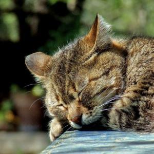 結局、睡眠