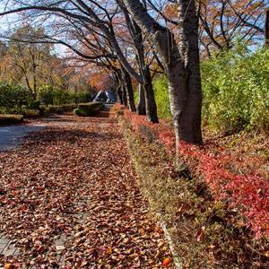秋は終わり