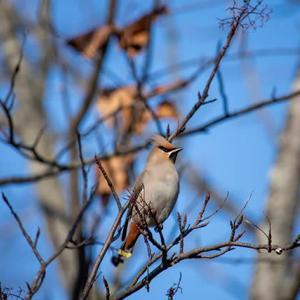 野鳥Vol.2