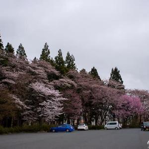 桜Vol.5