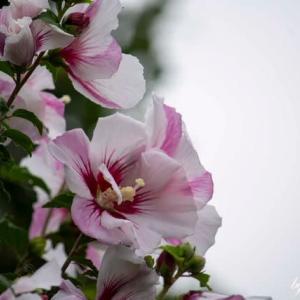 夏らしい花Vol.2