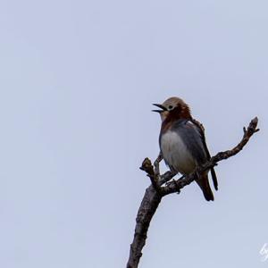 名前不明の小鳥・ケーズデンキさんの粗品のちびまる子ちゃんのタッパ