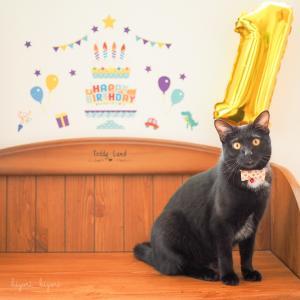 Happy 1st Birthday!!!