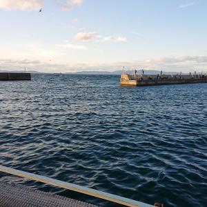 アジング 小島養漁場