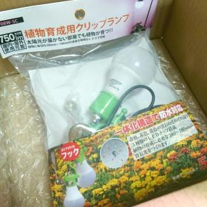 【セントポーリア】育成ライト と 植木鉢
