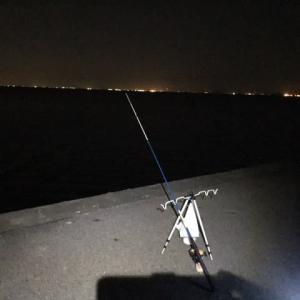 昨晩は夜釣りしました