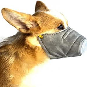 国内初 飼い犬からも 新型コロナ 陽性反応