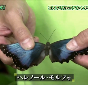 昆虫カタストロフィ