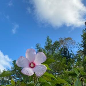 石川県でLomiLomi Hawaiiのぽかぽか体験会
