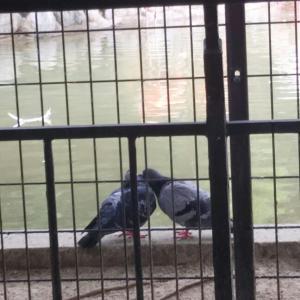 しとしとと小雨降るなかとぼとぼとおじさん一人動物園へ
