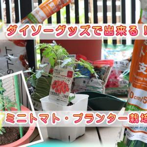 ダイソー連結トマト支柱&園芸用品で【ミニトマトのプランター・ベランダ栽培】やってみた!