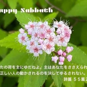 シモツケは、やっぱり栃木県と関係あり