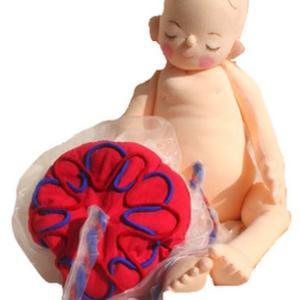 新生児モデルの人形と10カ月胎児人形の違いについて
