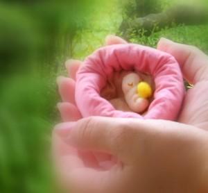 愛おしい♡愛おしい♡ 胎芽から胎児へ成長する姿