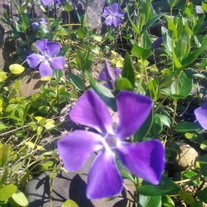 開花ラッシュです!