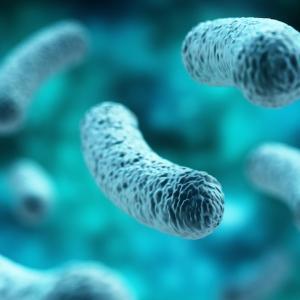がん微小環境改善剤:秋にも膵臓がんで臨床試験開始