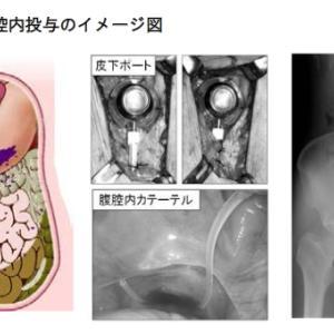 腹膜転移を有する膵がんに対する腹腔内投与併用療法