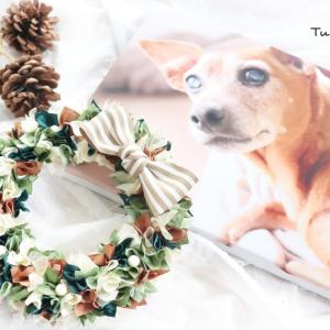 愛犬武蔵へのプレゼント☆