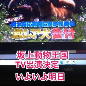 日本最大の日本テリア専門ブリーダー 千葉県 久々に、明日、当犬舎の日本テリアがTV出演決定 フジTV 坂上動物王国