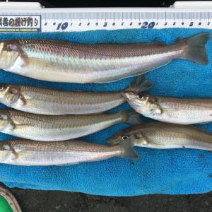 最近の釣行報告w
