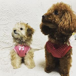 可愛いお友達のアラレちゃんとポンズちゃんからお写真いただきました!