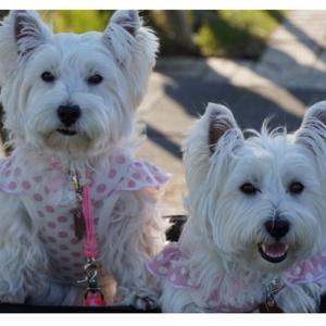 可愛いお友達のエマ&マリーちゃんからお写真いただきました!