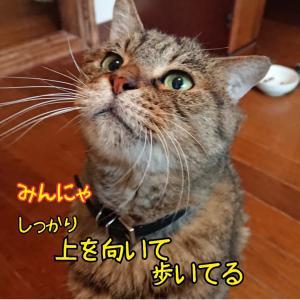 """""""【緊急】保護犬猫の一時預かりボランティアさん募集"""""""