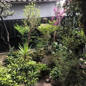 我が家の庭 2020年春