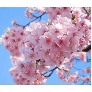 一歩踏み出す 春