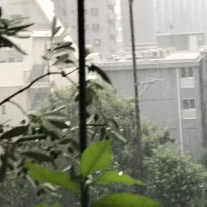 久しぶりに雹が降った日曜夕方の雷雨