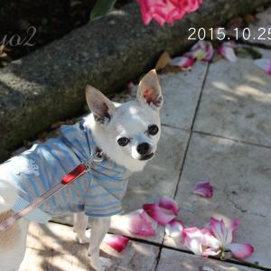 台風で被災した犬猫保護施設の支援