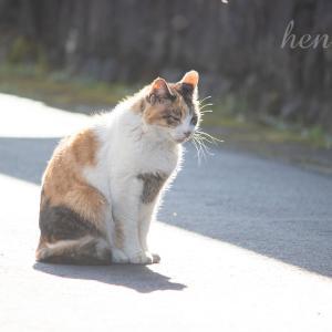 無愛想なご近所ネコたちのまったりライフ