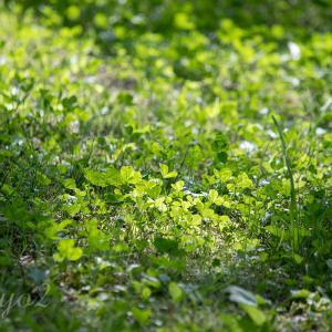 【一日一絵】春の山野草のシリーズ9枚。と、81枚まとめ。