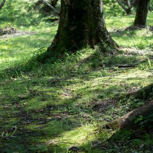 夏の森林散歩