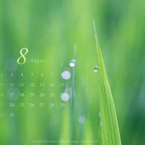 8月の壁紙カレンダーは田んぼの稲の露