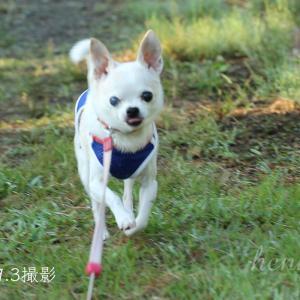 シニア犬の思い出と新しいエアコン