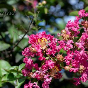 【一日一絵】晩夏の野の花シリーズ、9枚。ボタニカルな世界。