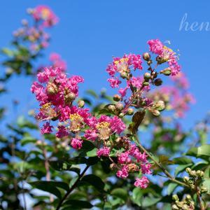 【一日一絵】夏から秋の樹木花シリーズ9枚。