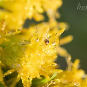 花の中の虫と、カメラのレンズのマウント問題