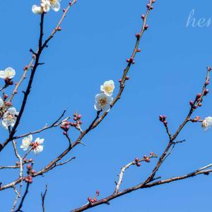 高まらない春気分と、小さめ加湿器