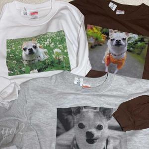 チワワの小太郎オリジナルTシャツ、カラーバージョン届きました。