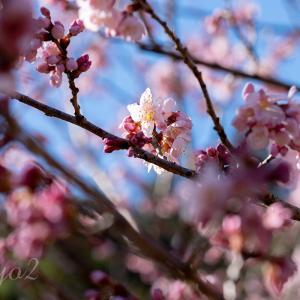 【一日一絵】ビビッドカラーのバラのシリーズ9枚。