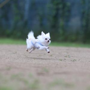 八ヶ岳わんわんパラダイス 飛行犬撮影