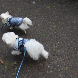 WAN'S RESORT城ケ崎でのお散歩へ