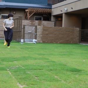 滋賀県大津 松の浦別邸のドッグラン