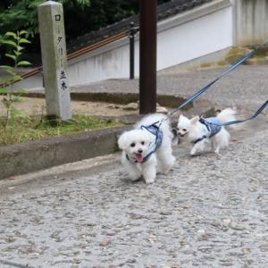 日本100名城 岡山県 津山城へ