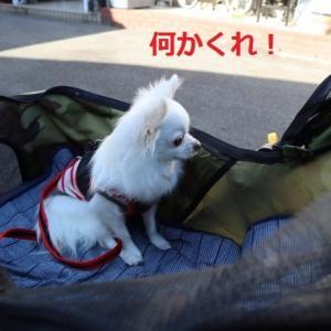 犬山城下町の車山蔵での味噌カツランチ
