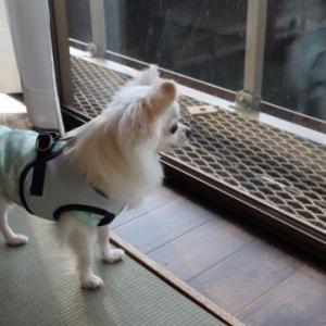 鳥取 ベイサイドスクエア皆生のお部屋チェック